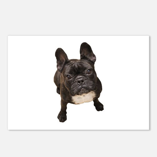Unique French bull dogs Postcards (Package of 8)