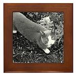 Little Grey Cat Framed Tile