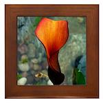 Red Calla Lily Framed Tile