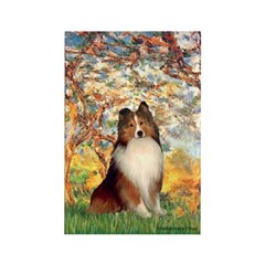 Spring / Sheltie (#1) Rectangle Magnet