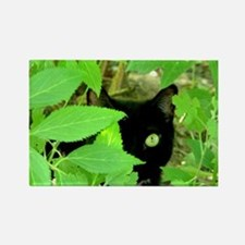 Green Eyed Cat Rectangle Magnet