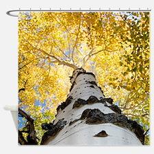 Unique Aspen trees Shower Curtain
