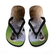 Cute Squirrel funny Flip Flops