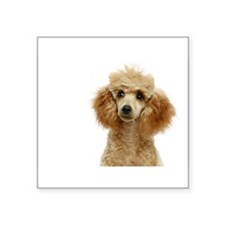 "Funny Poodles Square Sticker 3"" x 3"""