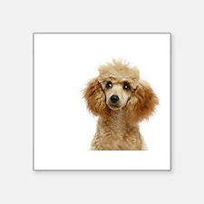 "Funny Apricot poodle Square Sticker 3"" x 3"""