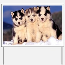 Three Husky puppies Yard Sign