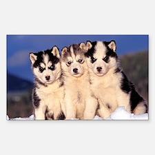 Three Husky puppies Decal