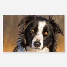 Border Collie 2 Decal