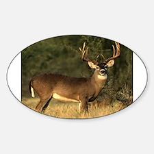 Beautiful Buck Decal