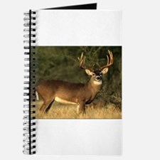 Beautiful Buck Journal