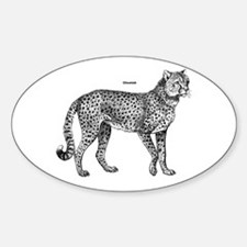 Cheetah Oval Decal