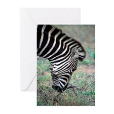 ZEBRA - Greeting Cards (Pk of 10)