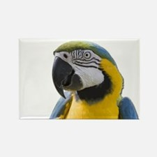 Blue and Yellow Macaw Thinking Magnets