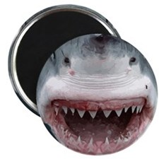 Shark Attack Head Sticking out of water Gr Magnets