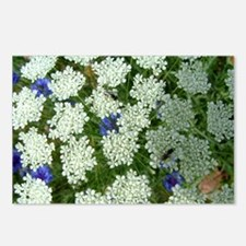 1032 Queen Annes Lace Postcards (Package of 8)