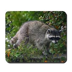 Raccoon Mousepad
