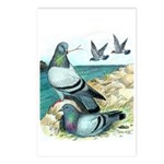 Rock Doves Postcards (Package of 8)