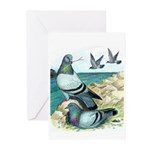 Rock Doves Greeting Cards (Pk of 20)