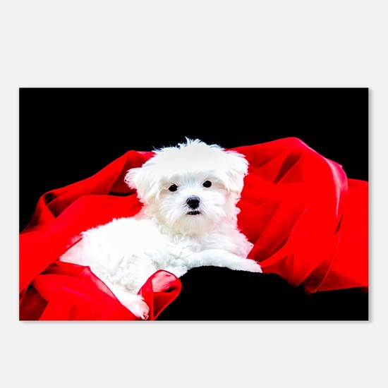 White Maltese Puppy Lying Postcards (Package of 8)
