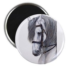 Andalusian Magnet