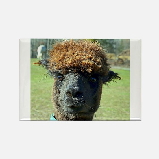 Black alpaca Magnets