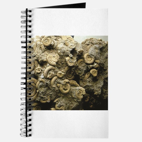 cluster of fossil shells Journal