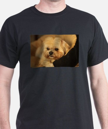 Koko blond Lhasa apso relaxing in soft dog T-Shirt