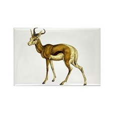 Springbok Antelope Rectangle Magnet