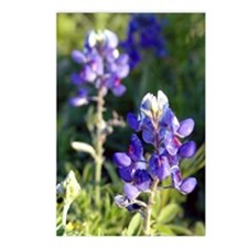 BlueBonnet Close Up Postcards (Package of 8)