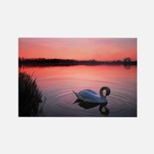 Swan on the lake Magnets