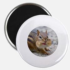 Cute Chipmunk lover Magnet