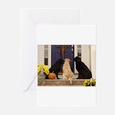 Cute Yellow lab photography Greeting Cards (Pk of 20)