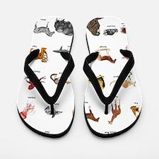 Animal pictures alphabet Flip Flops