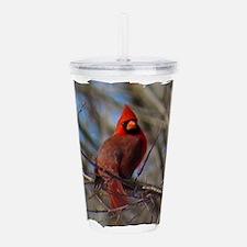 Male Cardinal Acrylic Double-wall Tumbler