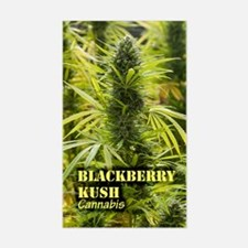 Blackberry Kush (with name) Sticker (Rectangle)