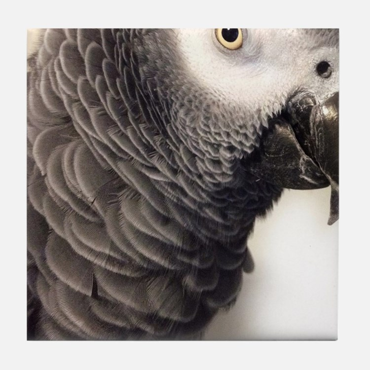 Cute African grey Tile Coaster