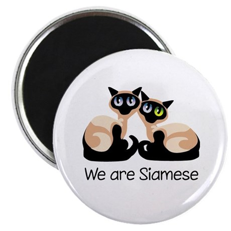 """We Are Siamese Cats 2.25"""" Magnet (100 pack)"""