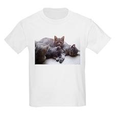 Cute 4 cats T-Shirt