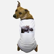 Funny 4 cats Dog T-Shirt