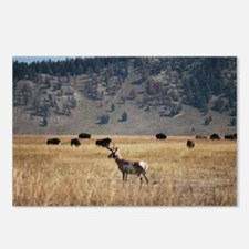 Yellowstone Bison and Ant Postcards (Package of 8)