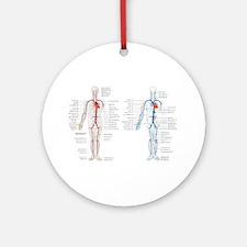 Blood circulatory chart Round Ornament