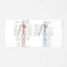Blood circulatory chart Aluminum License Plate