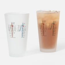 Blood circulatory chart Drinking Glass