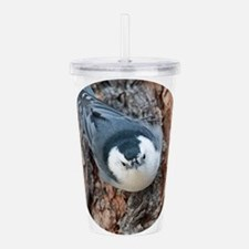 White-breasted Nuthatc Acrylic Double-wall Tumbler