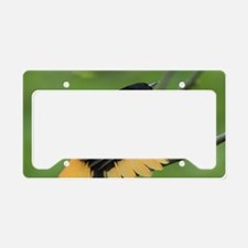 Cool Birds baltimore License Plate Holder
