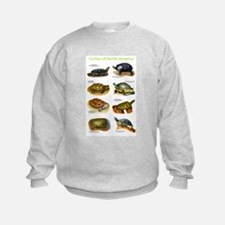 Cute Red eared slider turtle design Sweatshirt