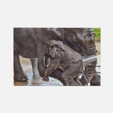 BABY ELEPHANT BATH TIME WITH MOTHER Magnets