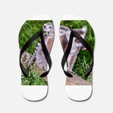RING TAILED LEMUR MOTHER AND BABIES Flip Flops