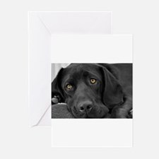 Cool Pets Greeting Cards (Pk of 10)