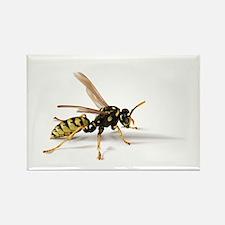 Umbrella Wasp Rectangle Magnet